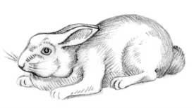 fearful rabbit