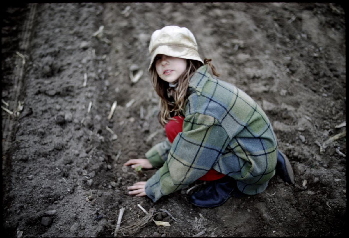 Howard's daughter, Anne, planting strawberries.