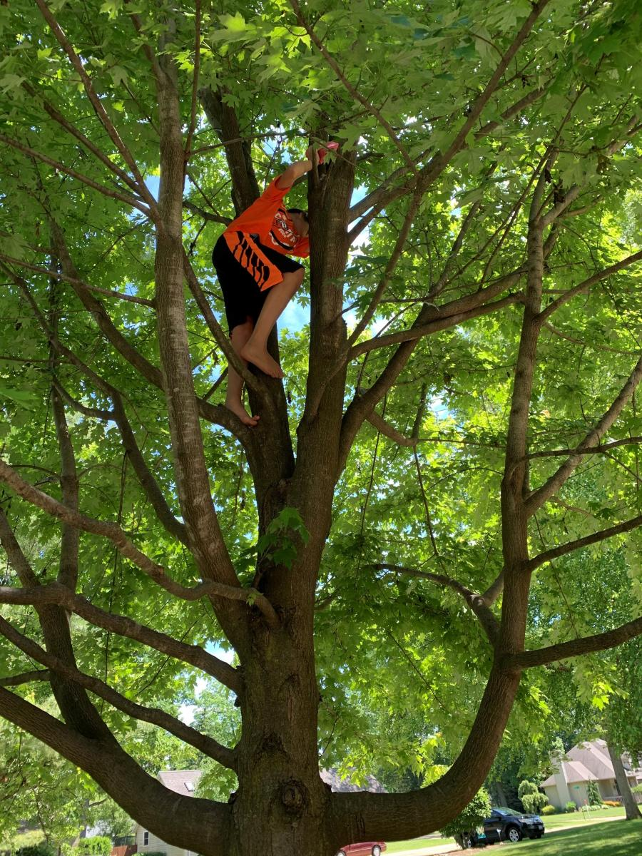 Hayden up in a tree to drop his egg for the egg drop activity.
