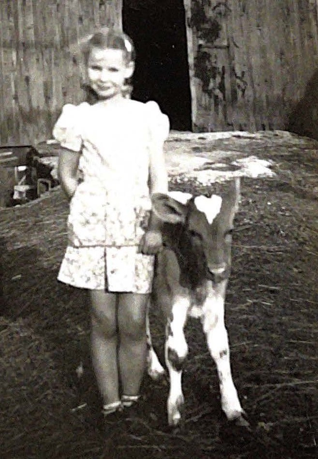 Young girl with a Guernsey calf in front of a barn.