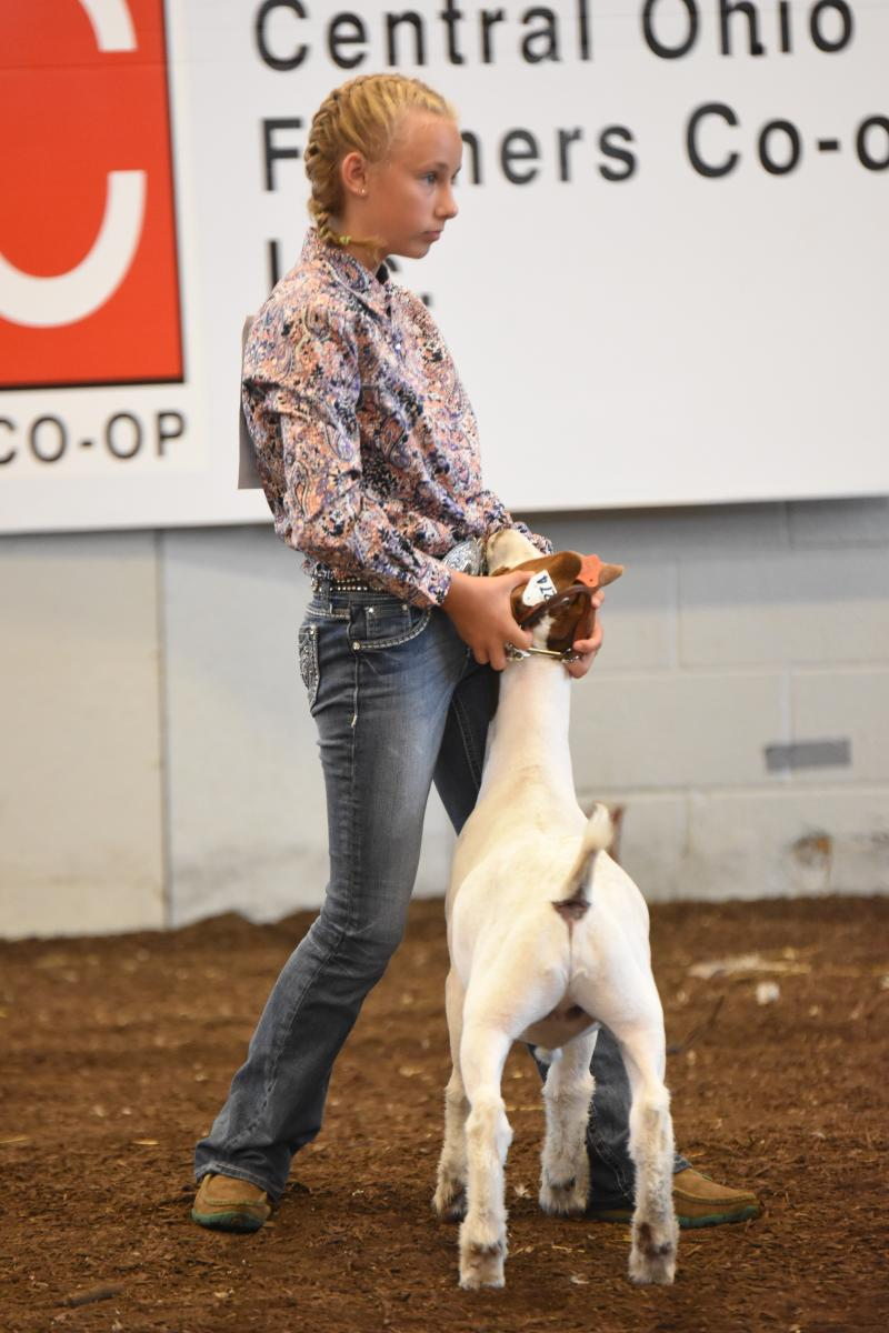 Braelyn showing her goat at the Marion County Fair.