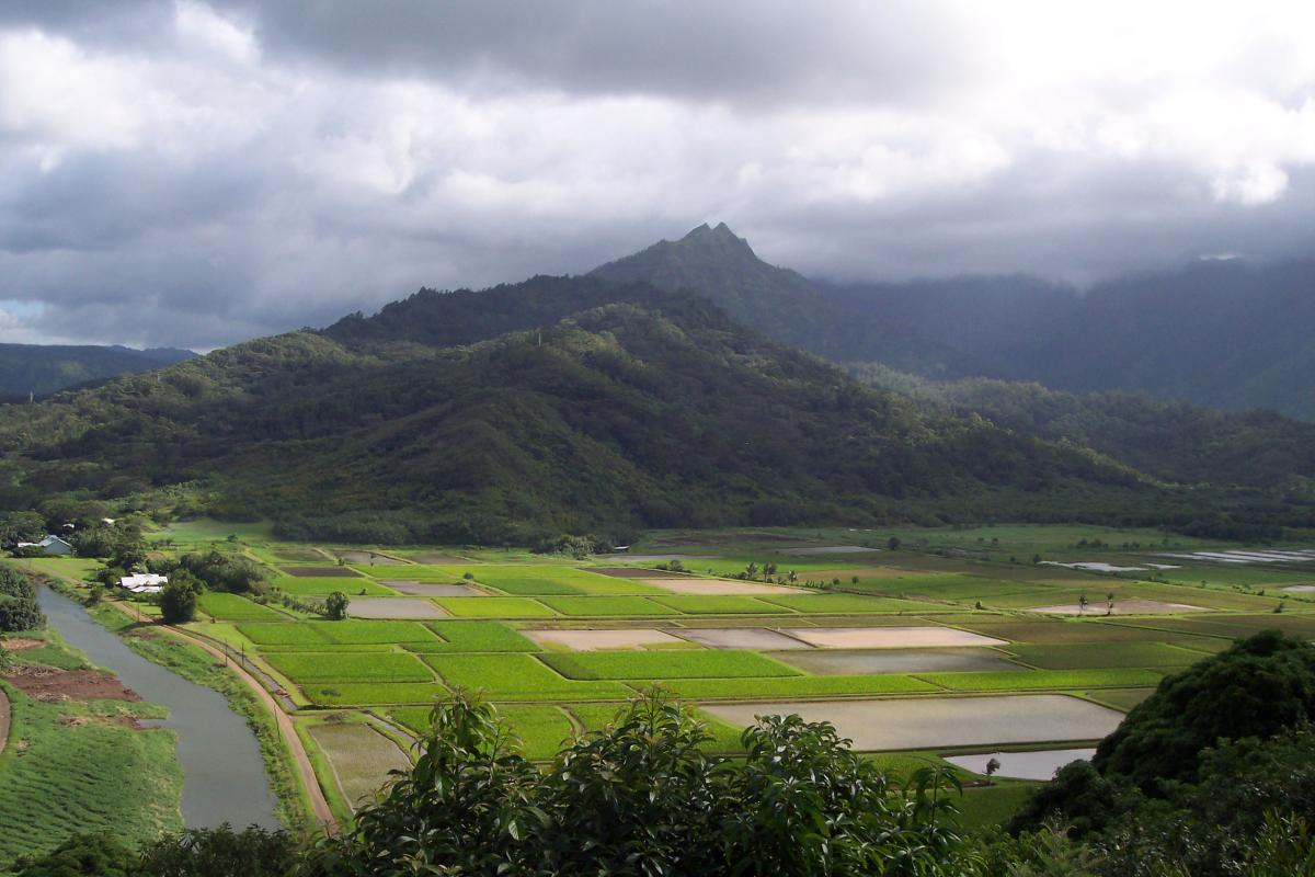 A view of Hawaiian farmland.