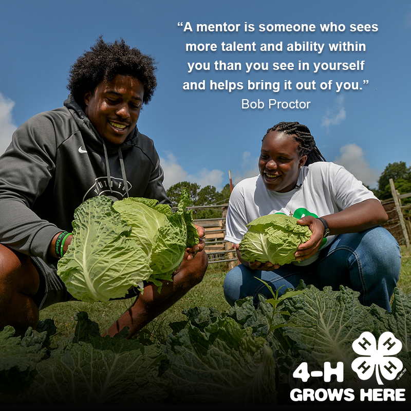 Adult and 4-H'er picking lettuce on a farm