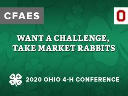 Want a Challenge, Take Market Rabbits