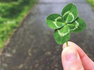 Two fingers holding the stem of a four-leaf clover.