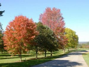 Fall color at Secrest Arboretum.