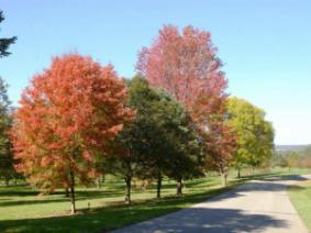 Fall color at Secrest Arboretum.